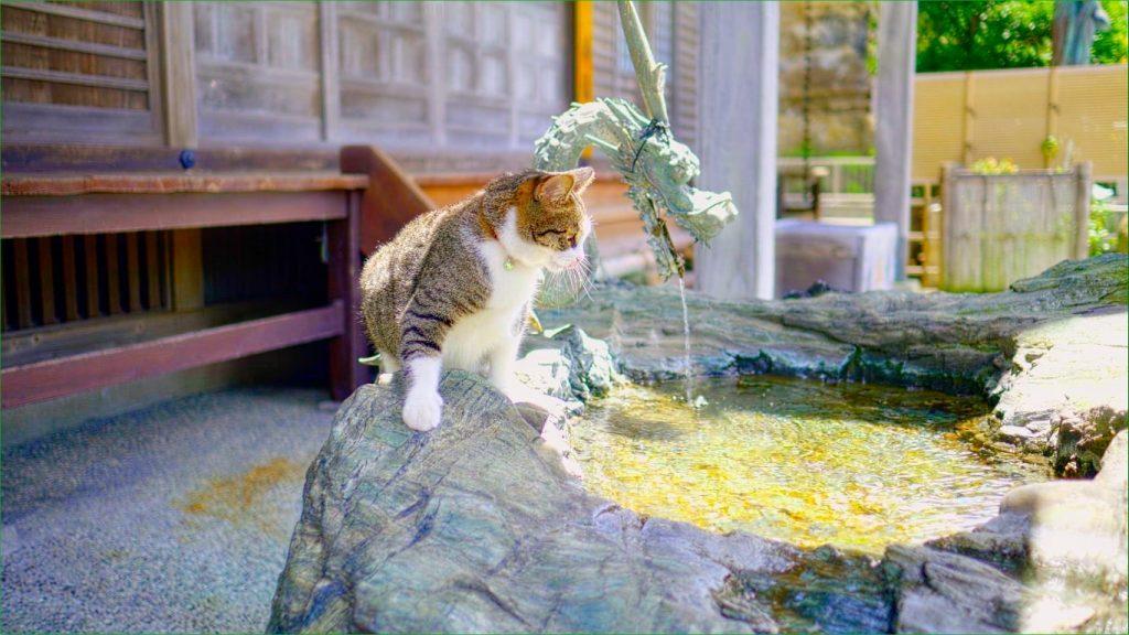 NHK BSプレミアムの世界ネコ歩きにも出演した猫